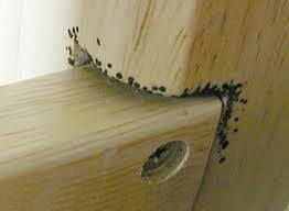 Can Bed Bugs Live In Dressers