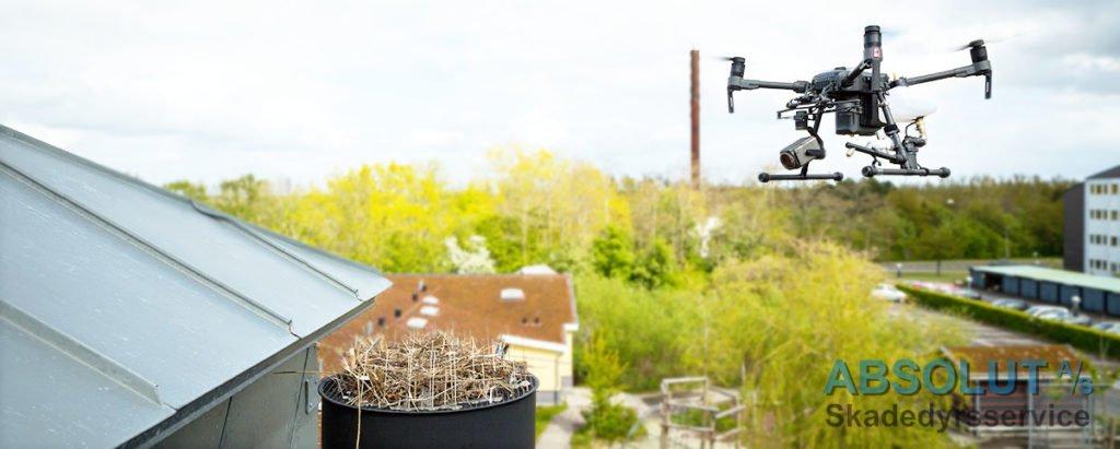 Bekæmpelse af måger med drone
