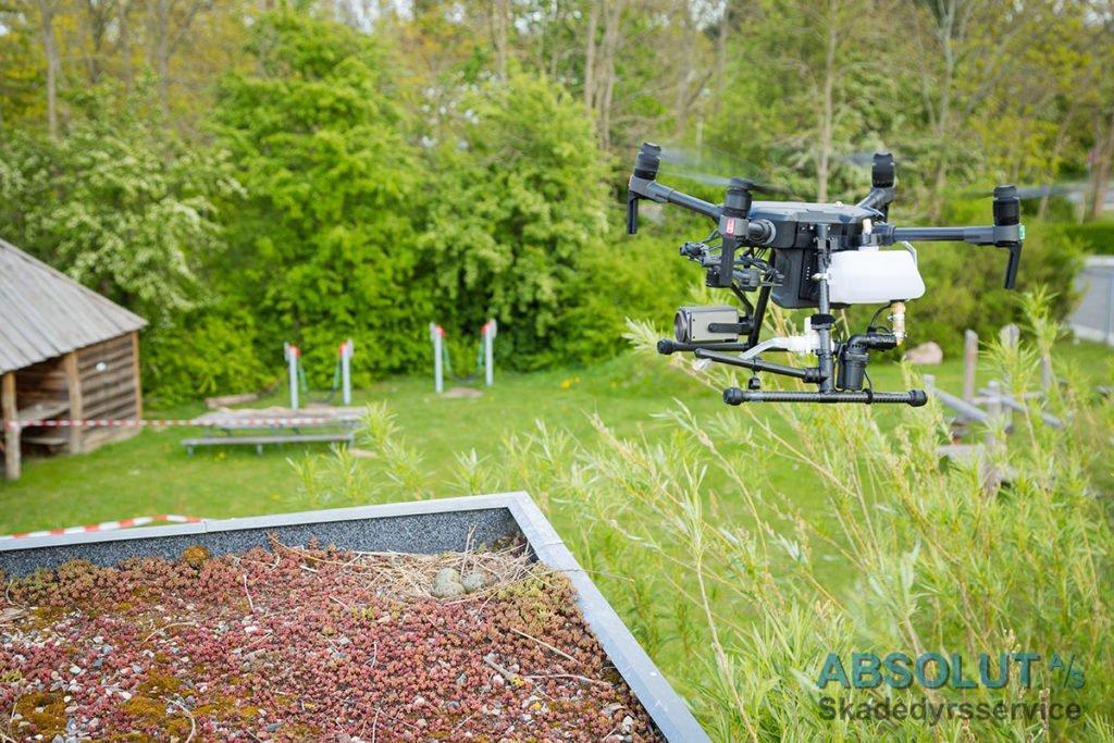 Drone sprøjter mågerede