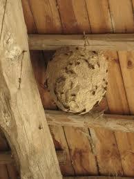 fjernelse af hvepsebo gratis