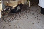 Plaget af kakerlakker