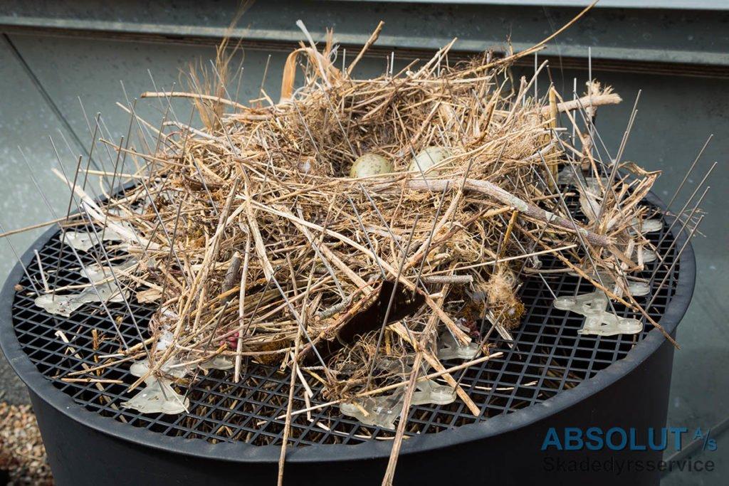 Mågerede i duepigge opdaget med drone